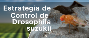 ban drosophila